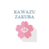 2021【河津桜まつり】伊豆の河津桜情報!見頃、アクセス、駐車場は?